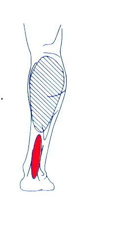 spända muskler skulderblad